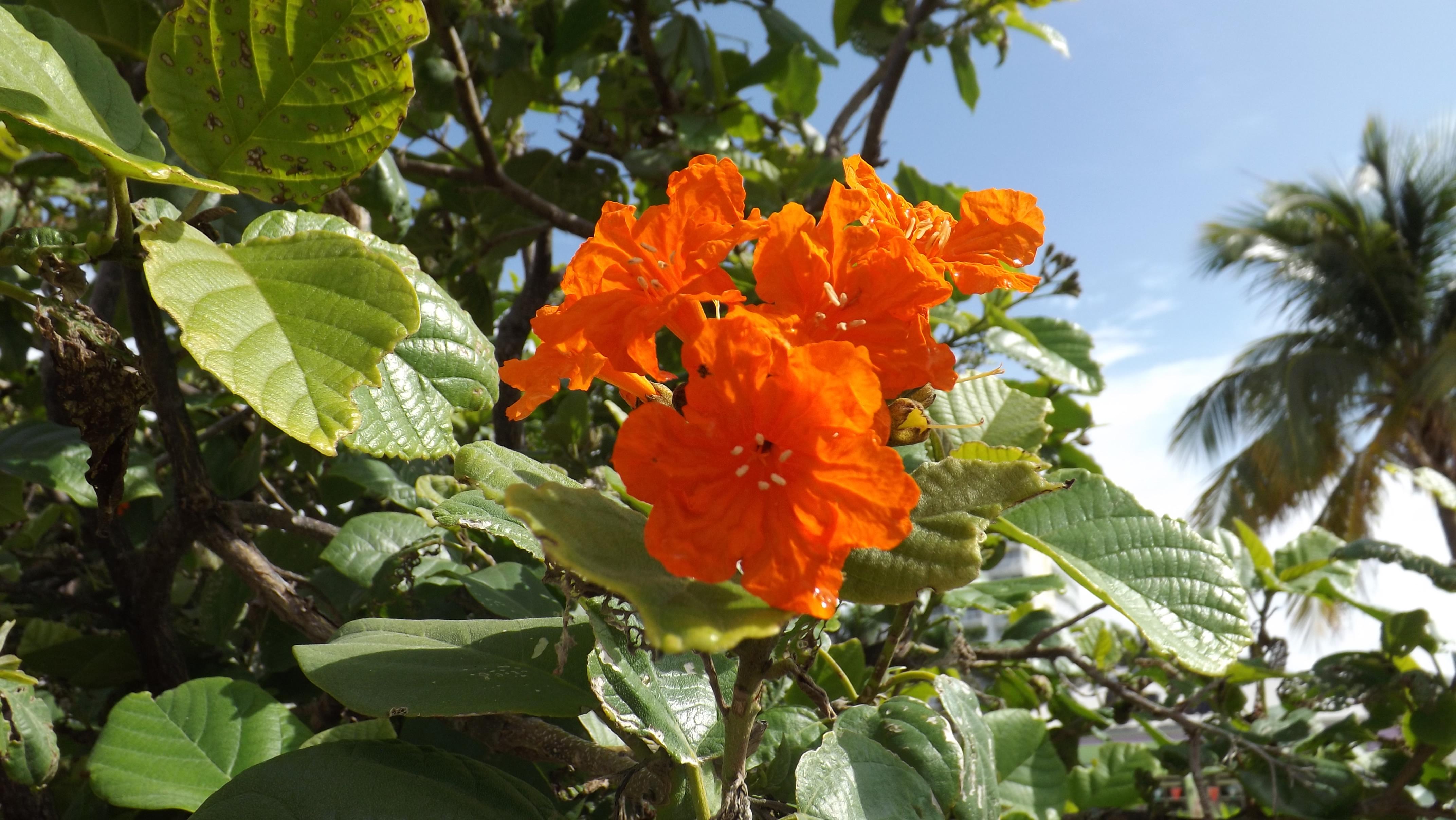 Speed dating orange tree solihull - Rich kvinde ser kvinde