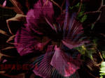 Inside + Oustide [We The Flowers]