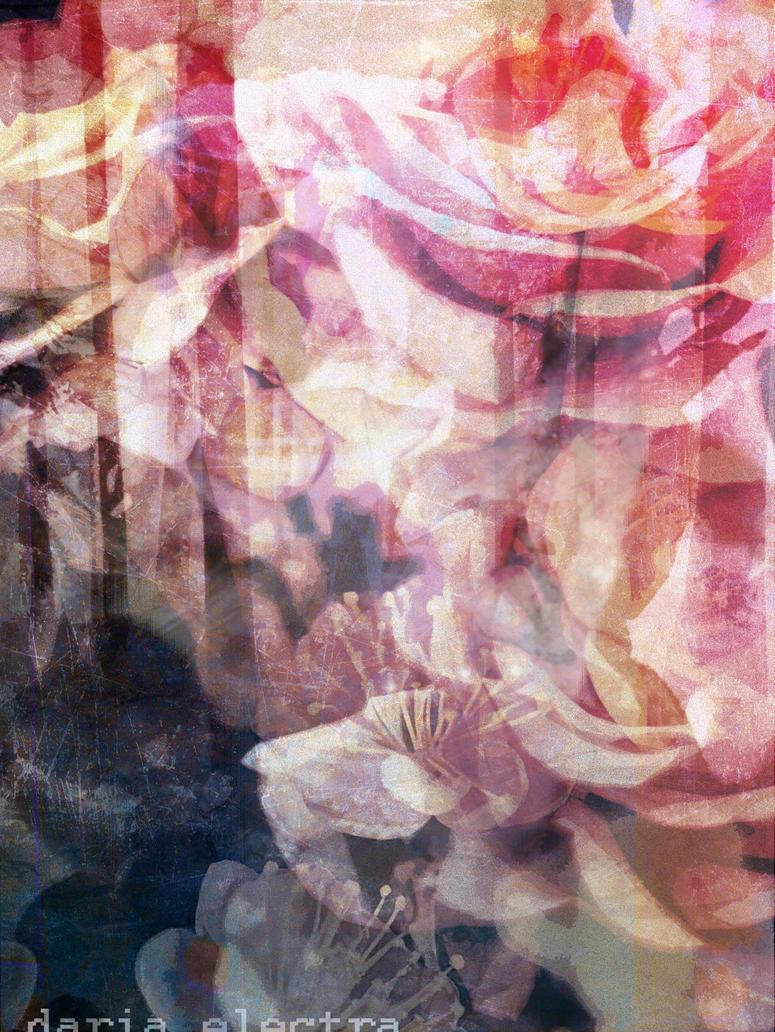 Dear Rose #1 [Warm and Cold] by jackskarma
