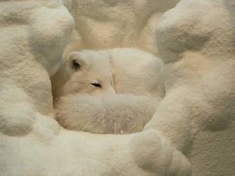 Animals - Arctic Fox 1 by MoonsongStock