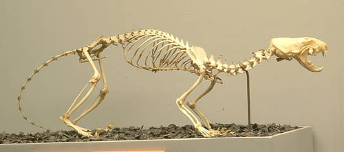 Animals - Skeleton 3 by MoonsongStock