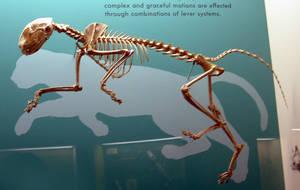Animals - Skeleton 4 by MoonsongStock