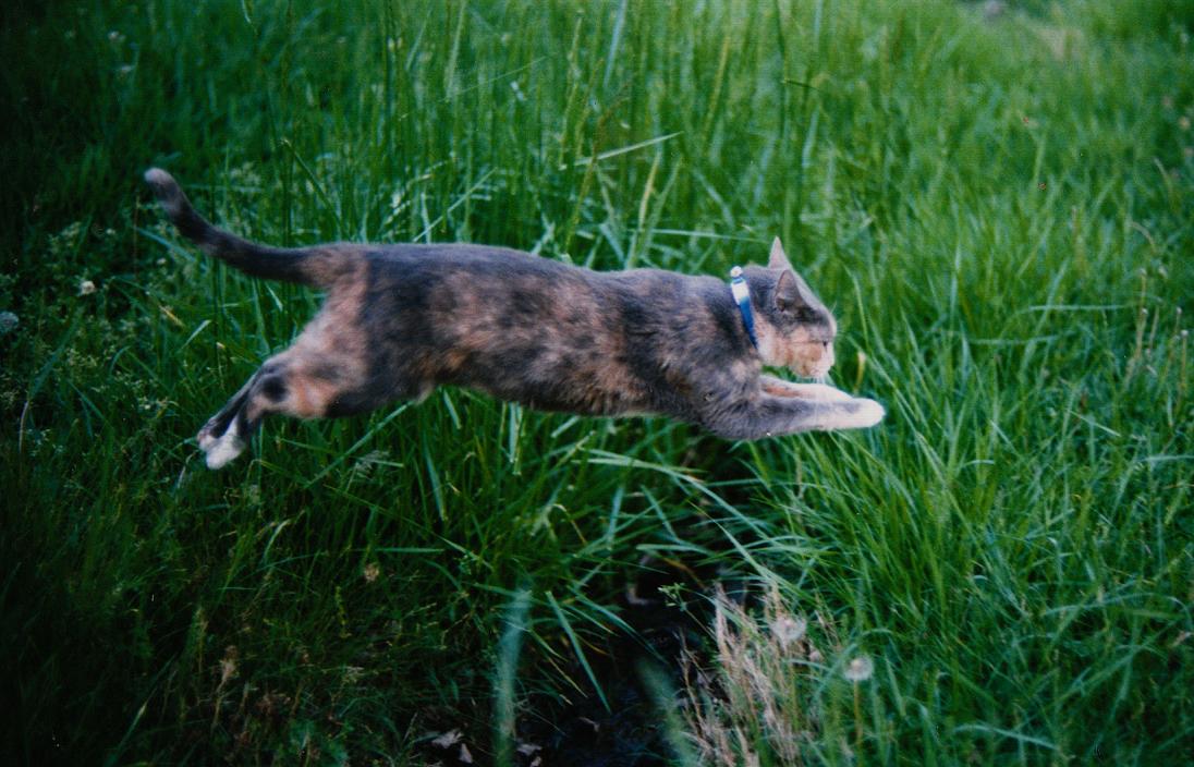 Animals - Cat 3 by MoonsongStock