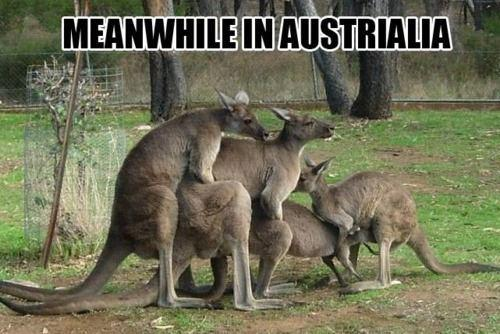 Meanwhile in Australia by TimothyCake090