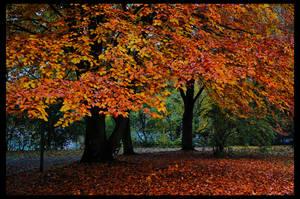October Falls by doomed-forever