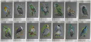 Mostly Colourful Birds