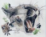 Cougar Portraits