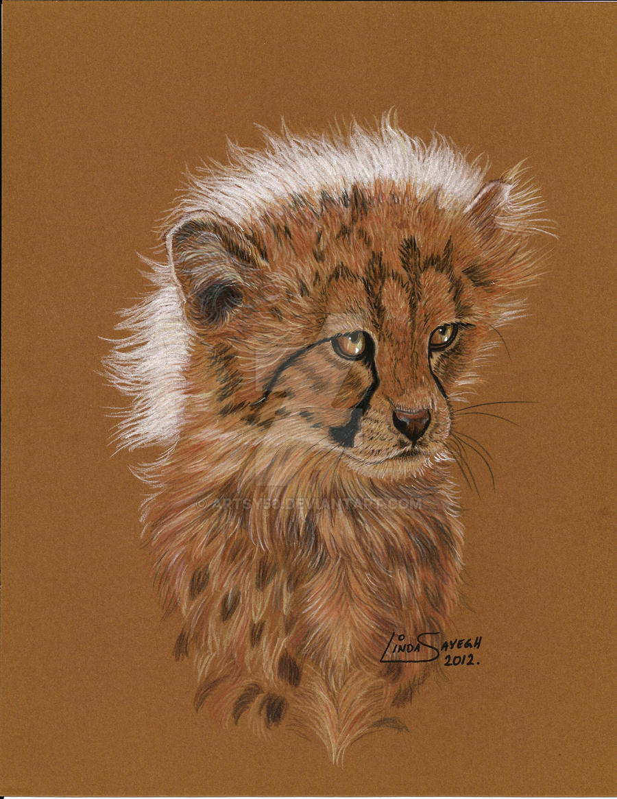 Cheetah Cub... for International Cheetah Day! by Artsy50