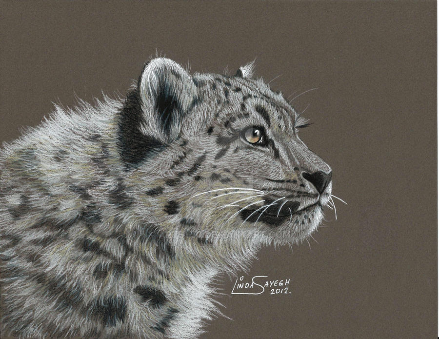 Snow Leopard... by Artsy50