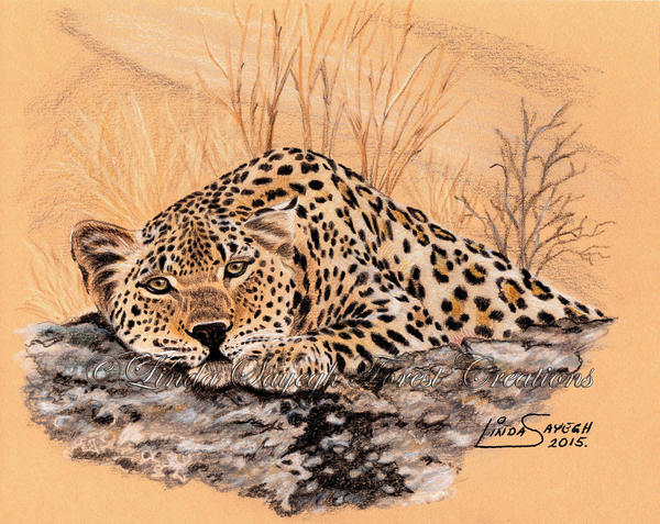 Lazy Leopard by Artsy50