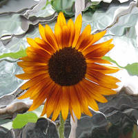 Sunflower by SP88