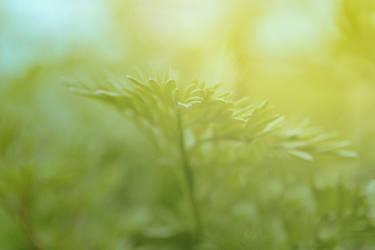 Bright Light by iWasBornToSurvive