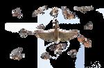 Collection of kestrel schika