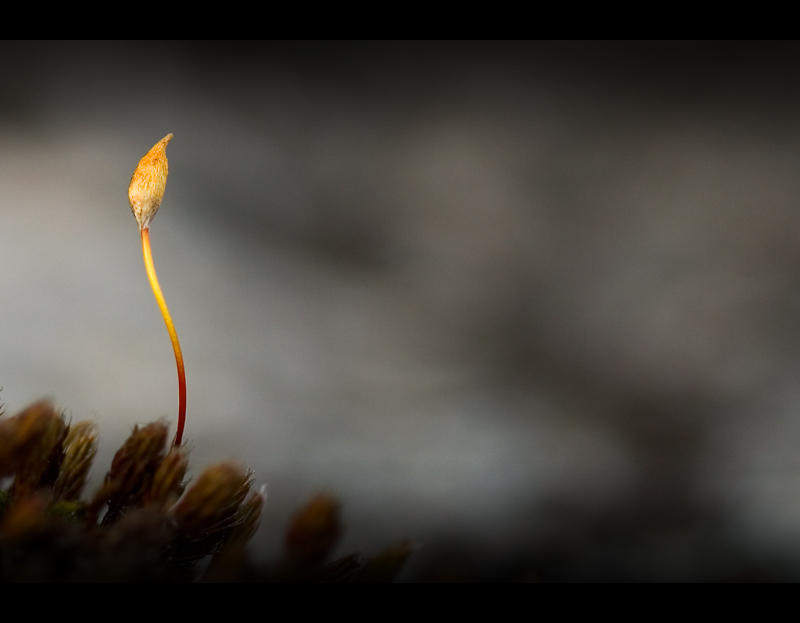 Simplicity by Solkku