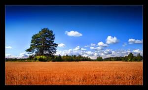 Fields of Gold by Solkku