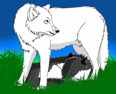 Alesa and The Arctic Wolf