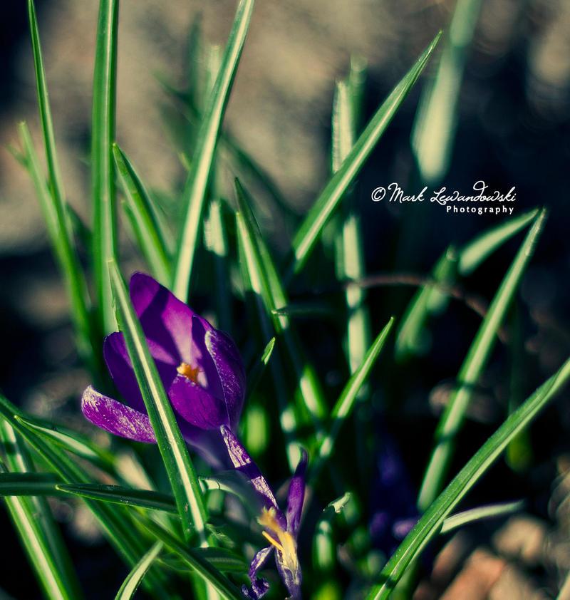 Simplicity. by lewandator