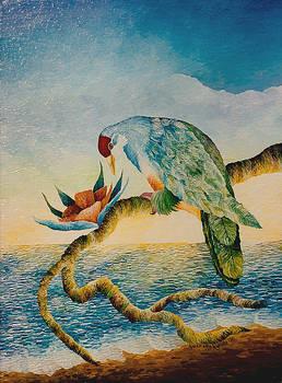 Dove at Dawn