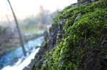 Mossy Twig by smleimberg