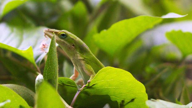 Green Lizard by smleimberg