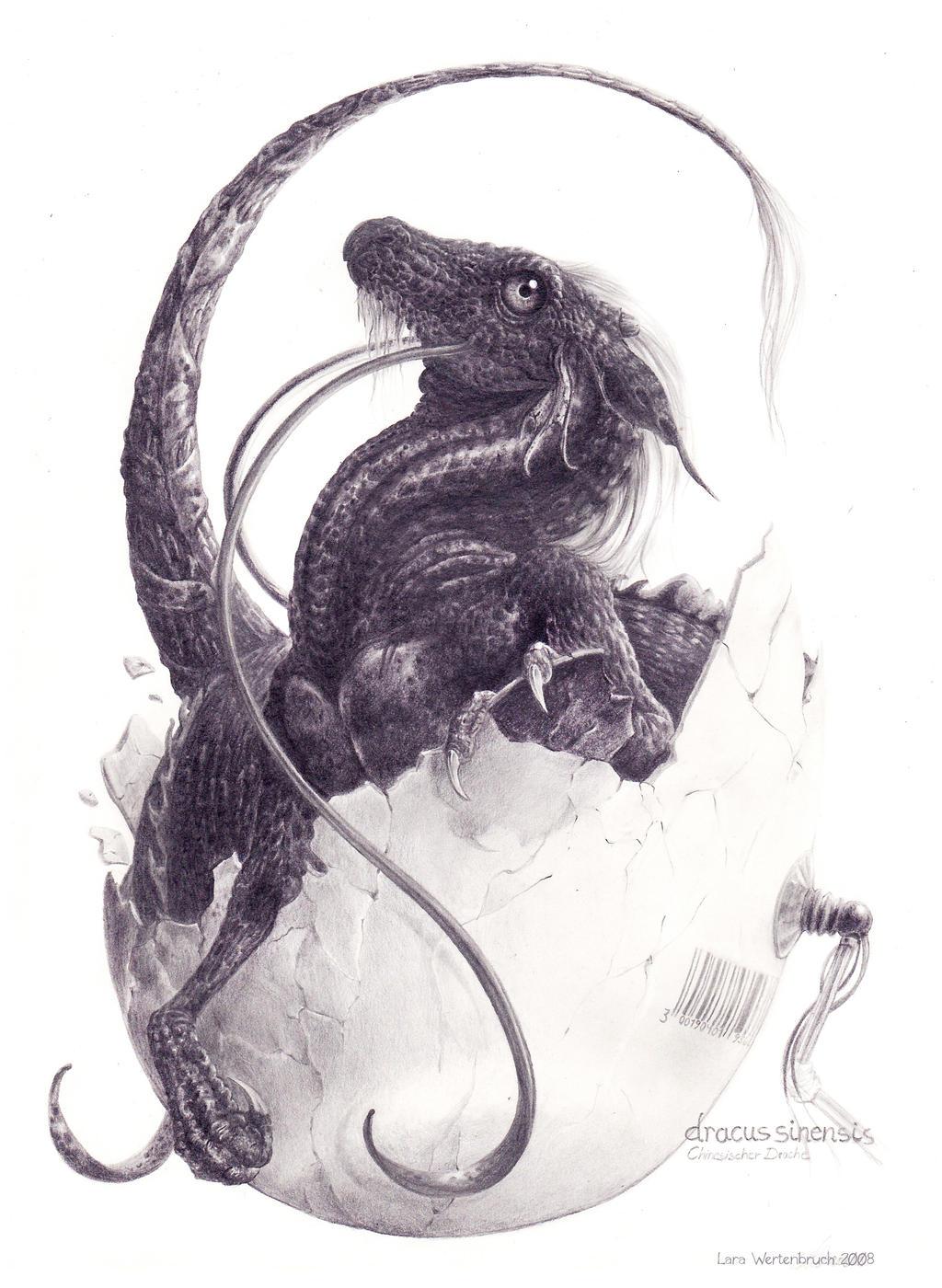 Dracus Sinensis by wuselarts