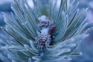 Frosted Tips II by Lumimyrskydawn