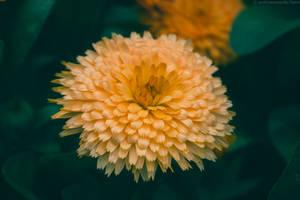 Forever Orange by Lumimyrskydawn