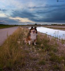 Happy Dog. by Lumimyrskydawn