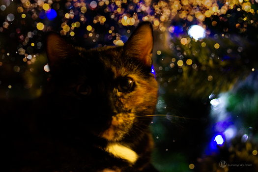 Christmas Phantom