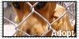 ::Adopt:: by WrathOfReeses