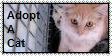 .:.Adopt.:. by WrathOfReeses