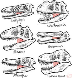 Theropods heads