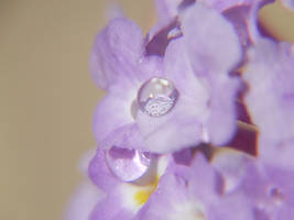 Serene Purple by SaldaeanFarmgirl