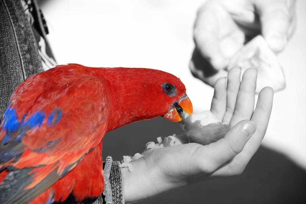 Red by SaldaeanFarmgirl