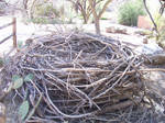 Big Nest by SaldaeanFarmgirl
