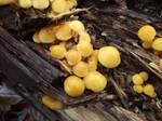 Mushrooms 10-31-2014-18