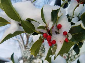 Bellingham Winter-12Feb2018-S13 by SkyfireDragon