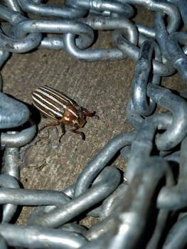 Junebug in Chains-02 by SkyfireDragon