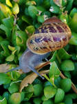Snails on the verge-10
