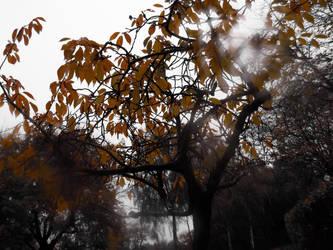 Tears of Trees by Spidergeist
