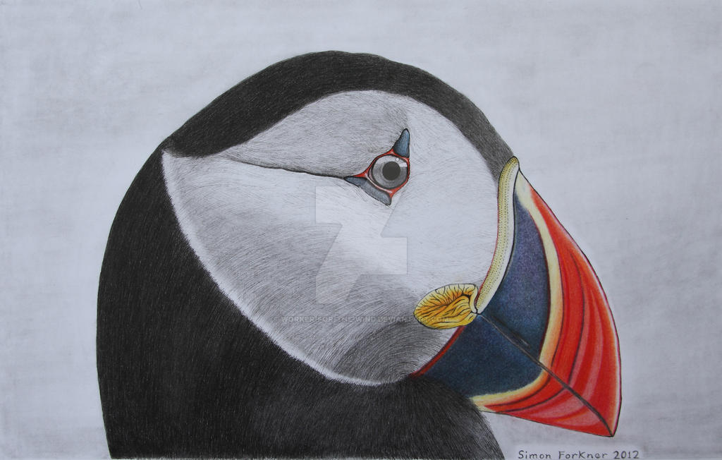Puffin Portrait by Worker-for-the-Wind