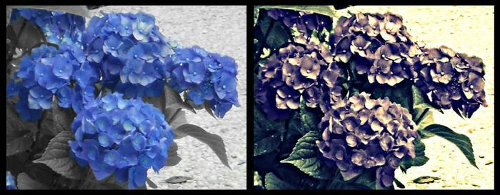 Purple Flowers Original