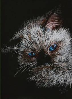 Cat in Pastel