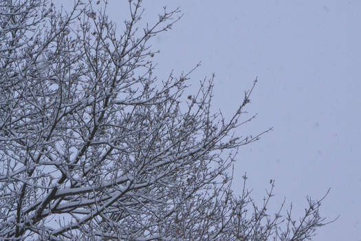 Snow branches