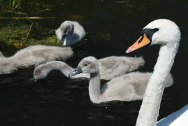 Swan bodyguard by elgregorPL