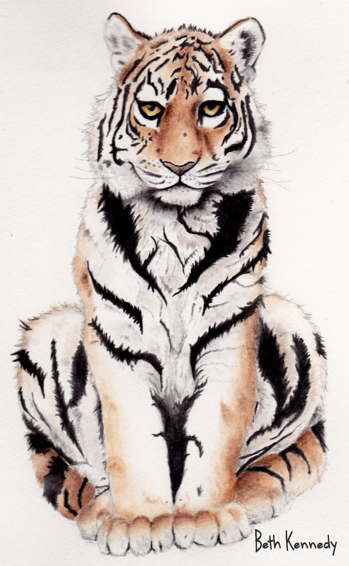 Tiger by CaptainBeth