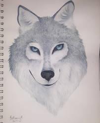 Grey wolf by CaptainBeth