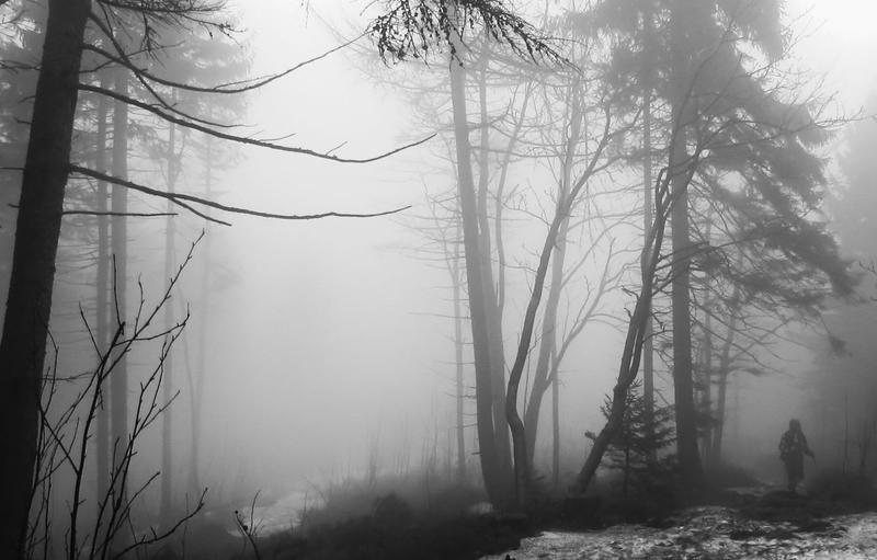 Lurking In The Mist II by myusernameistaken2