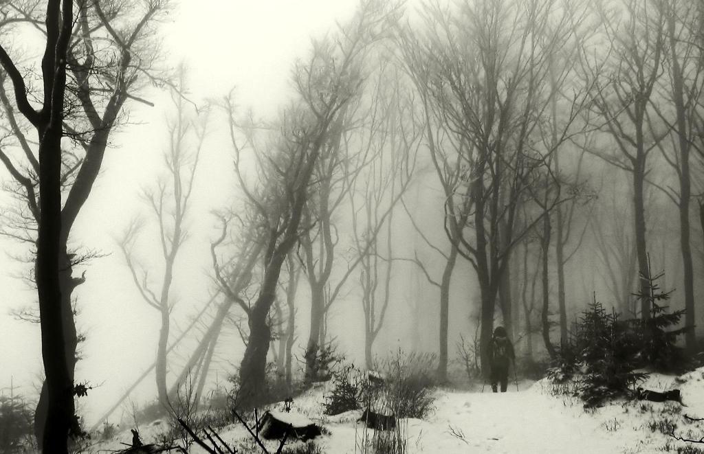 Lurking in the Mist III by myusernameistaken2