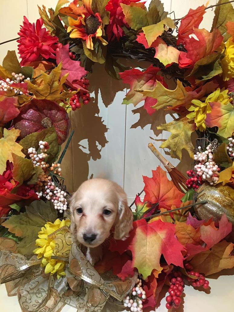 Cute name for a dachshund go!!! by LittleRavine